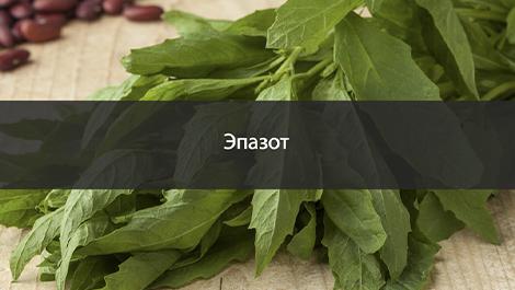 Эпазот - Лекарственная и пряная трава из Мексики
