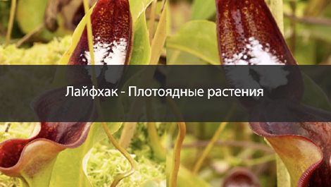 Удобрение кувшинных растений