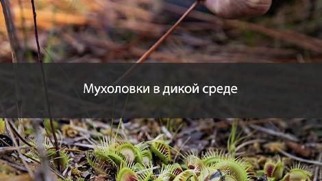 Понимание среды обитания мухоловки