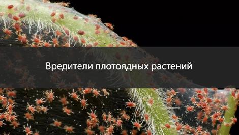 Самые распространённые вредители плотоядных растений