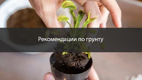 Почва для хищных растений