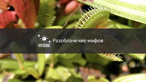 Мифы о хищных растениях